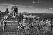 Vign_Zoo