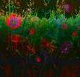 Vign_fleurs40