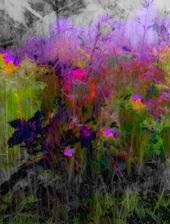 Vign_fleurs41